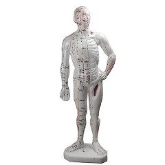 "Medical Technology Products Human Body Model 10"" - Acupunture Point Model"
