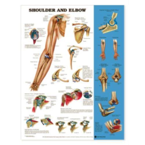 test-nnn Shoulder & Elbow Chart Model 573 1012