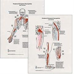 Clinical Charts And Supply Peripheral Entrapment Neuropathics 2 Chart Set