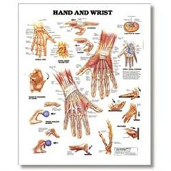"Lippincott Hand And Wrist Chart, 20"" X 26"" Styrene"