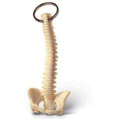 Lippincott Key Chain Spine