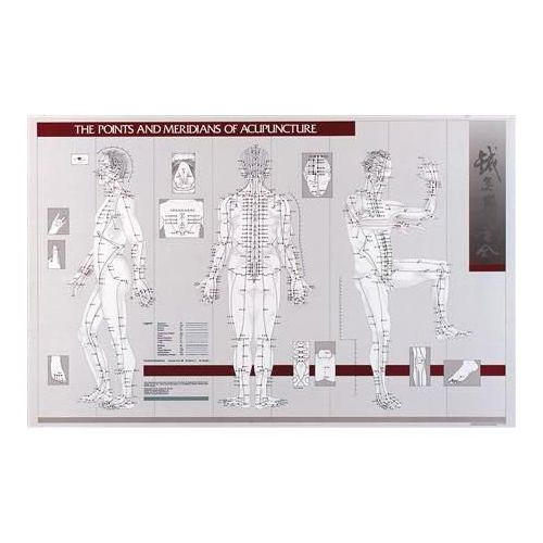 """Lippincott Points & Meridians Of Acupuncture Chart 23"""" X 36"""" Model 573 1000"""