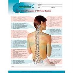 Koren Publications Vital Connect Spinal Poster Laminated 18X24