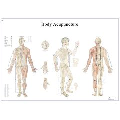 3b Scientific Anatomical Chart - Acupuncture Body, Laminated