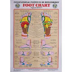 Lippincott Int. Institute Of Reflexology Foot Chart 23 X 30""