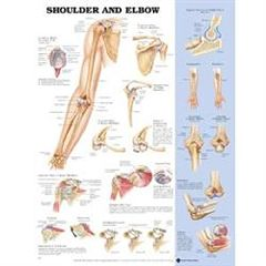 "Lippincott Shoulder/Elbow Poster 20"" X 26"" Styrene"