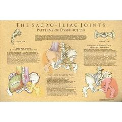 Clinical Charts And Supply The Sacroiliac Joints: Patterns Of Dysfunction