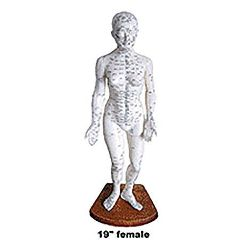 "Medical Technology Products Female Body Model 19"" - Acupunture Point Model"