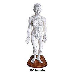 "Female Body Model 19"" - Acupunture Point Model"