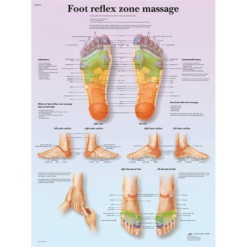 3b Scientific Anatomical Chart - Foot Massage, Reflex Zone, Laminated Model 573 1024