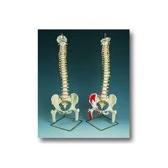 Flexible Spinal Column Flexible Spinal Column