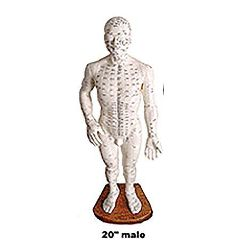 "Medical Technology Products Male Body Model 20"" - Acupunture Point Model"