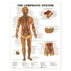 Complete Medical Products Lymphatic System Chart