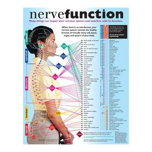 Back Talk Systems, Inc Nerve Function Handouts 50 Pack Model 795 0141