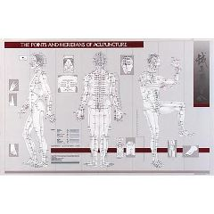 "Lippincott Points & Meridians Of Acupuncture Chart 23"" X 36"""