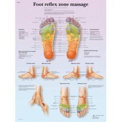 3b Scientific Anatomical Chart - Foot Massage, Reflex Zone, Laminated - Anatomical Chart - Foot Massage, Reflex Zone, Laminated