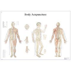 3b Scientific Anatomical Chart - Acupuncture Body, Paper - Anatomical Chart - Acupuncture Body, Paper