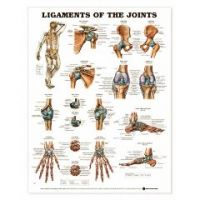 Ligaments of the Joints Chart - Each